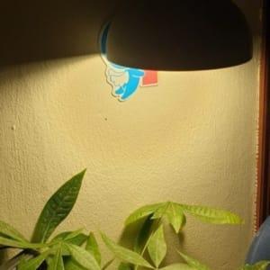 Bóng đèn LED trồng cây Grow Light Nhật Bản