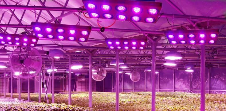 Hệ thống đèn led trồng cây trong nhà