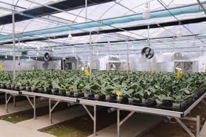 Lắp đặt hệ thống đèn led cho vườn hoa lan