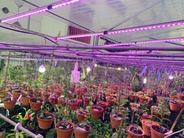 Mua đèn led trồng hoa Lan